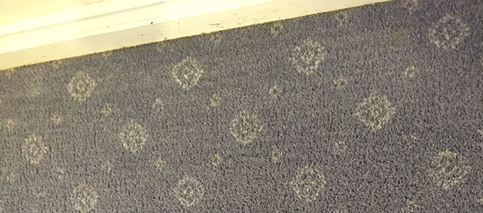 Carpet Steam Cleaning Company